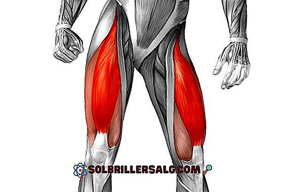 4 suprahyoidiniai raumenys ir jų funkcijos