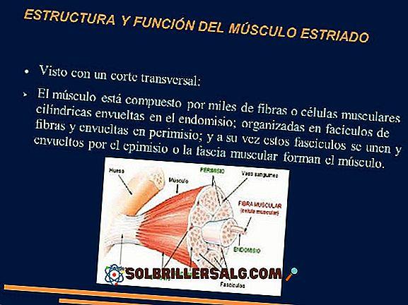 Хеликаса: характеристики, структури и функции