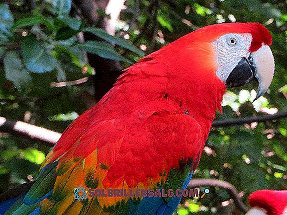 10 djur i östra Ecuador