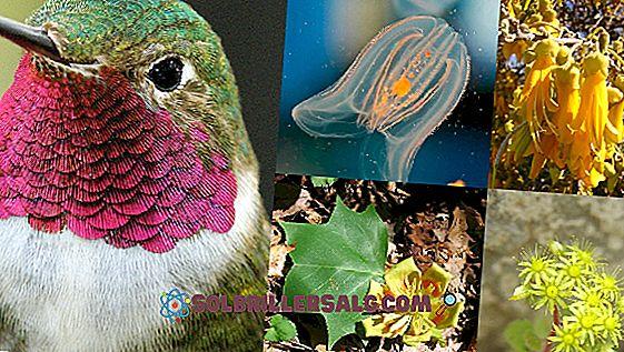 Differenziazione cellulare: negli animali e nelle piante