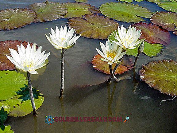 Flora e fauna di Hidalgo: specie più importanti