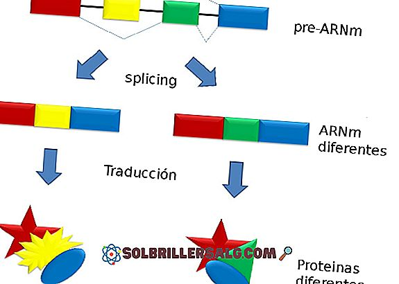 Splicing (genetica): in cosa consiste, tipi