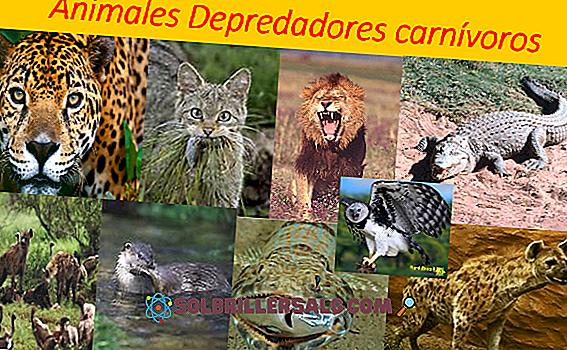 biologia - Zwierzęta konsumenckie: charakterystyka i 10 przykładów
