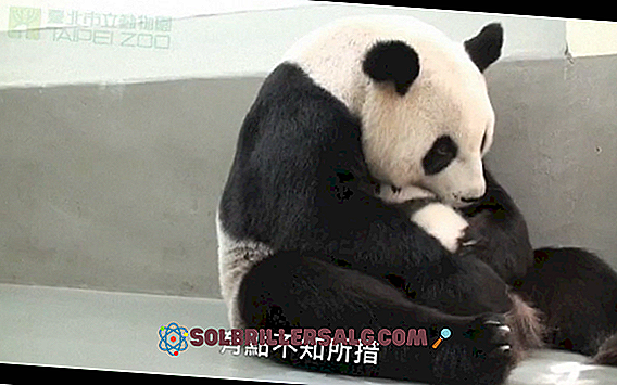 Топ 20 на животните в Китай
