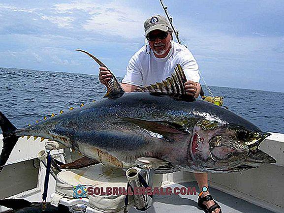 أهم 20 من حيوانات البحر المالحة
