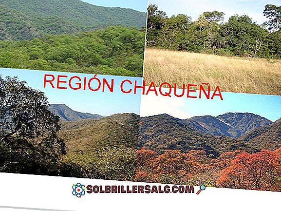 Bosque Chaqueño: الخصائص ، المناخ ، الإغاثة ، الموقع ، النباتات والحيوانات