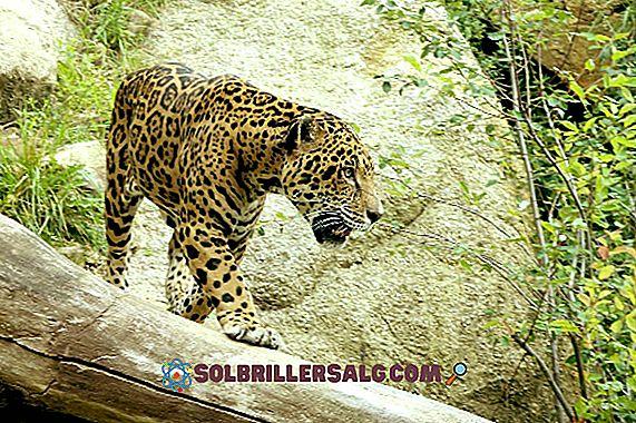10 išskirtinių Peru miško gyvūnų