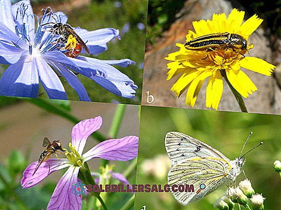 Entomologie: histoire, études et exemples de recherches récentes