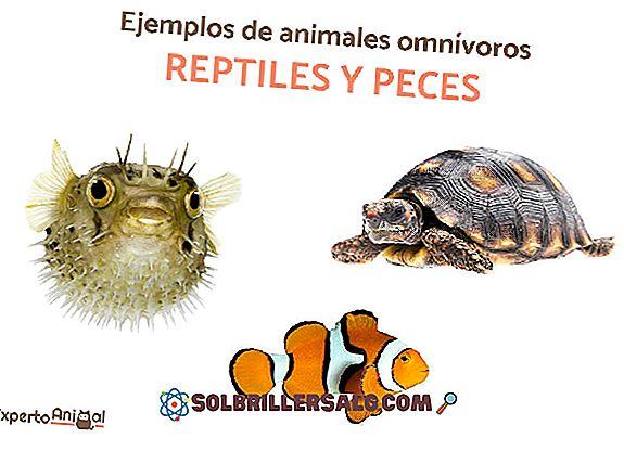 Hexactinélidos: klasifikasi, karakteristik, habitat, contoh spesies