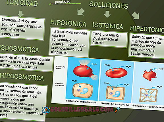 โซลูชัน Hypotonic, Isotonic และ Hypertonic (พร้อมตัวอย่าง)