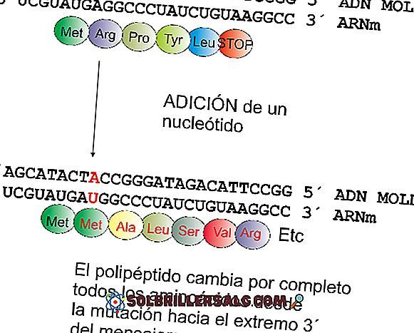Genetika drift: sebab, efek, contoh