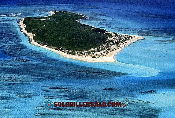 8 animais da região caribenha da Colômbia