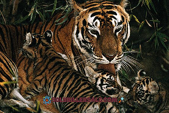 10 zwierząt sawanny i jej cechy