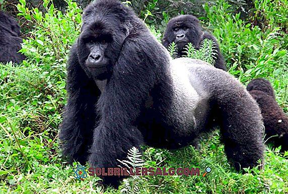 10 حيوانات جبلية وخصائصها