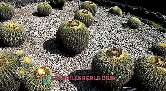 20 piante in pericolo di estinzione in Messico