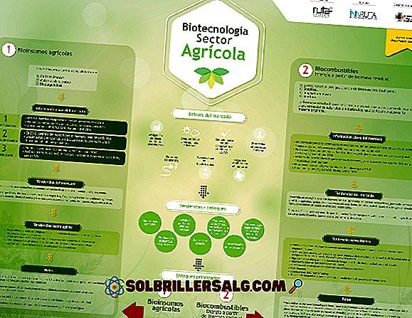 Cele 5 ramuri ale principalei biotehnologii