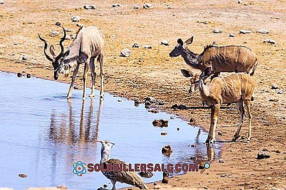 20 الحيوانات التي تعيش في الصحراء الأكثر تمثيلا 2021