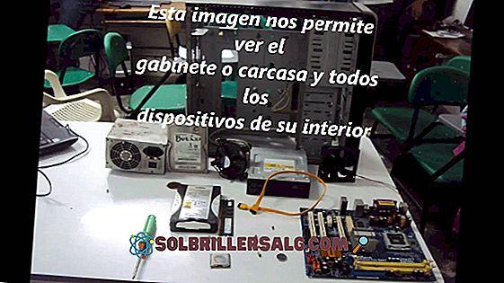 Endoesqueleto: Teile und Funktionen