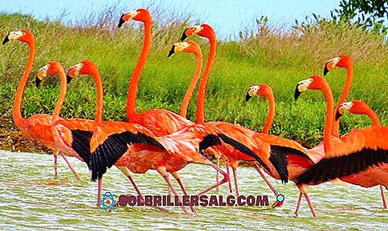 Flore et faune du Yucatán: les espèces les plus représentatives
