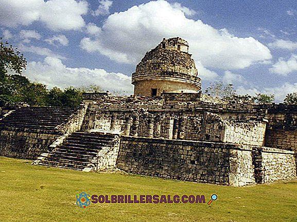 5-те най-представителни растения на Юкатан