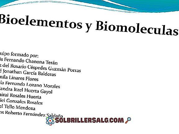 Biomolekuły: klasyfikacja i główne funkcje