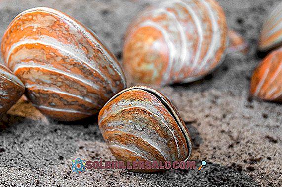 Branchiopoda: caratteristiche, classificazione, riproduzione, alimentazione