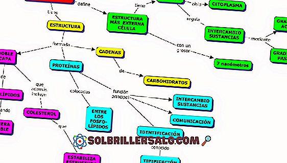 Zellwand: Eigenschaften, Funktionen und Struktur