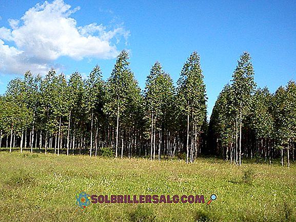 Thực vật rừng: 5 loại và đặc điểm