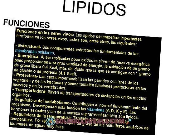 Lipid yang tidak dapat disahkan: fungsi dan klasifikasi