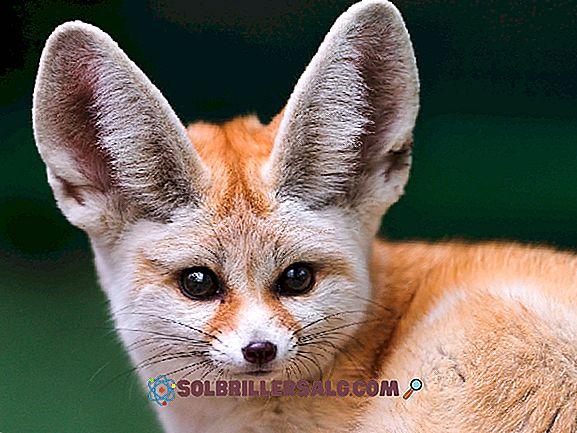 10 Binatang Gurun Meksiko Paling Penting