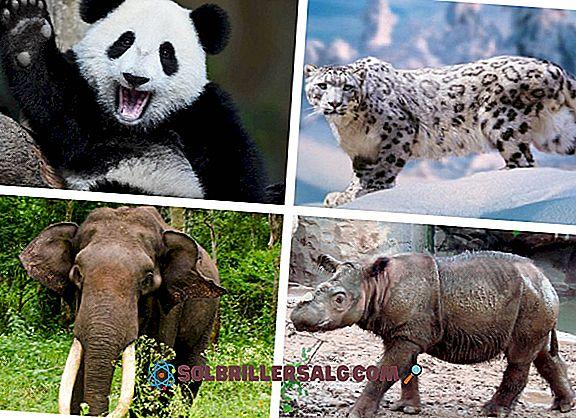 10-те най-представителни азиатски животни