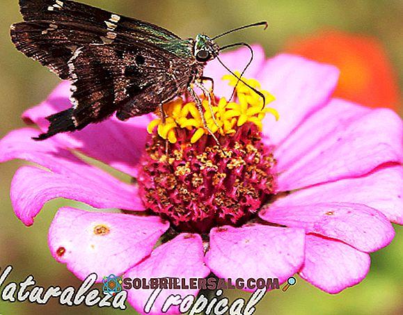Ce este polenizarea?