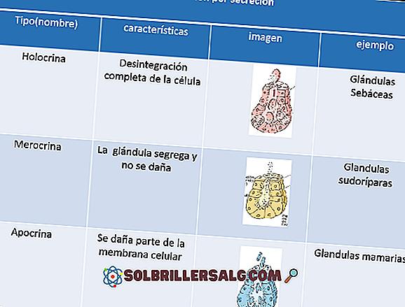 Goblet papiller: egenskaper, funksjoner, histologi