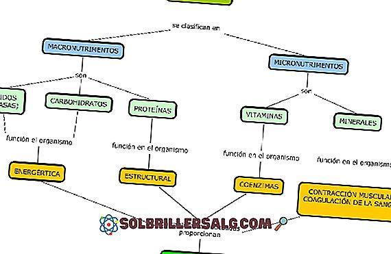 Biomolecole inorganiche: caratteristiche, funzioni, classificazione ed esempi
