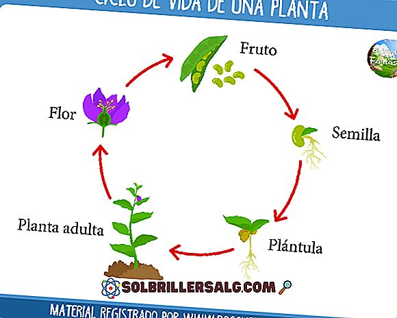 Livssyklusen til planter (for barn og voksne)