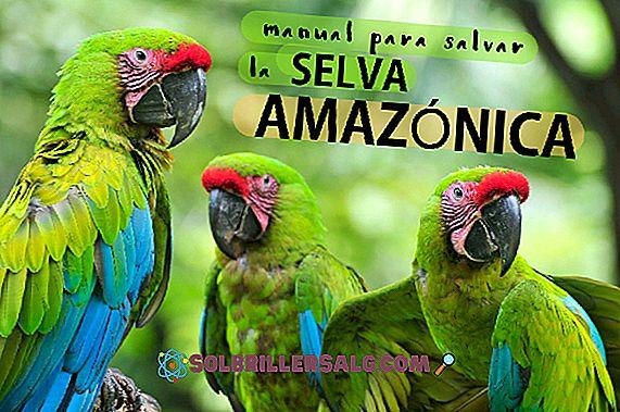 Cele 10 cele mai remarcabile animale din pădurile tropicale