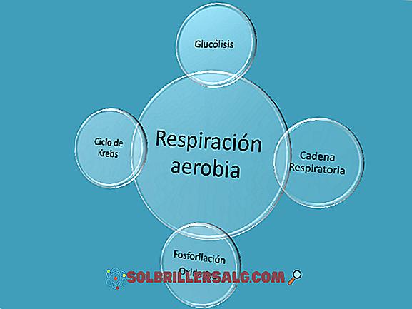 5 esempi di respirazione anaerobica