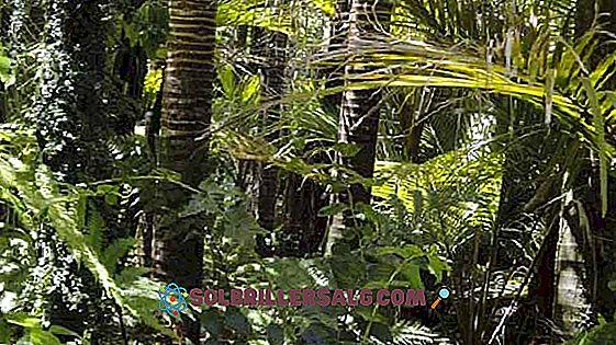 النباتات والحيوانات في الغابة الاستوائية الخصائص والأنواع التمثيلية 2021