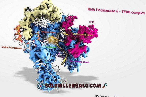 DNA polimerasi: tipi, funzioni e struttura
