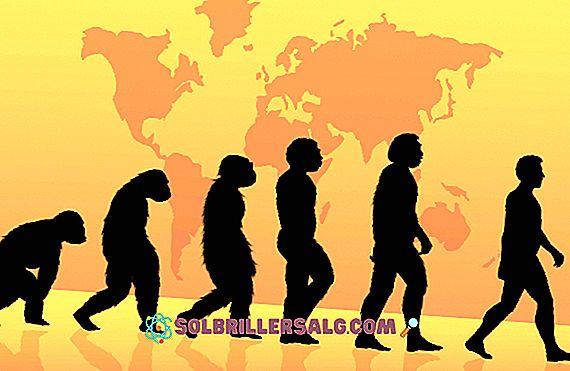 الأنثروبولوجيا البيولوجية: ما هي الدراسات والفروع والأهمية