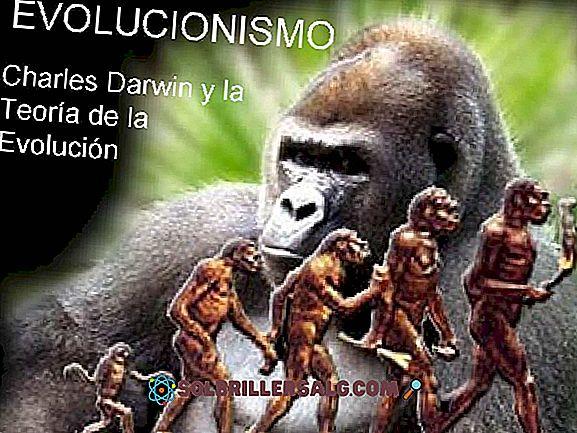 Charles Darwin: Biographie und Theorien der Evolution und Selektion