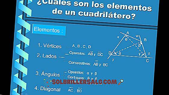 Care sunt cele 3 elemente ale unui vector?