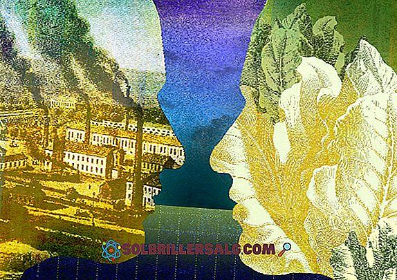 Descolonização: características, causas, conseqüências, exemplos