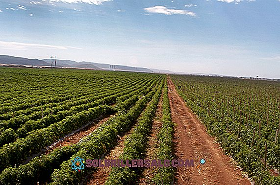 الزراعة في منطقة البحر الكاريبي: المحاصيل الرئيسية
