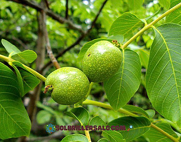 I 30 frutti della Sierra Ecuadoriana più comune