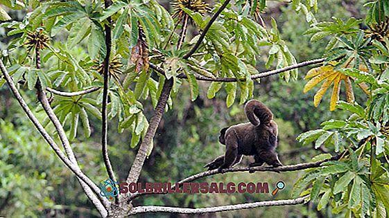 10 animale în pericol de dispariție în Columbia
