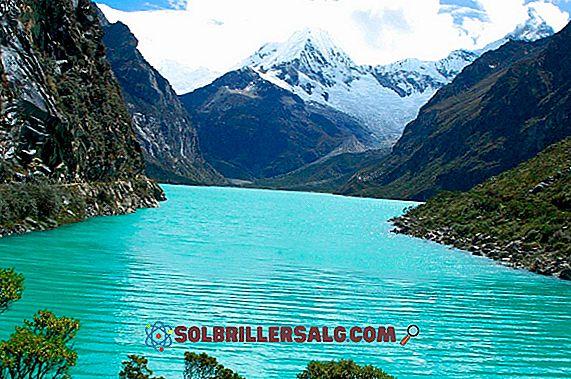 ما هي أقسام غابة بيرو؟