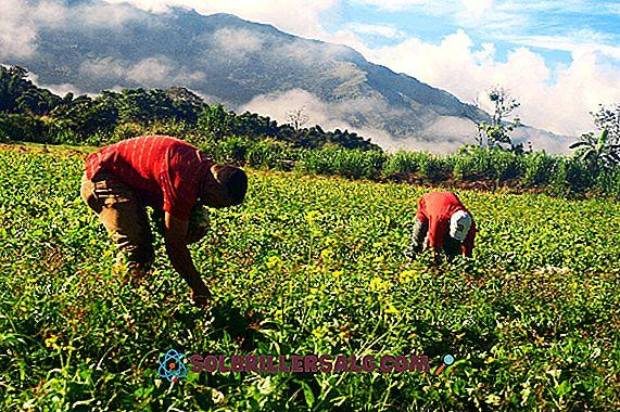 Le 10 attività economiche più importanti del Guatemala