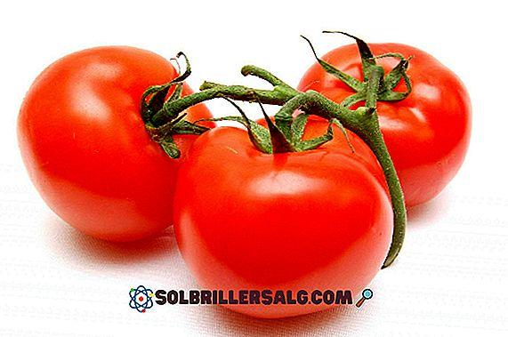 20 verdure in Kaqchikel (con pronuncia)
