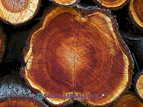 10 Materialien pflanzlichen Ursprungs